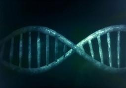 DNA-molecula