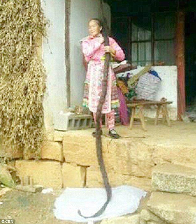 Rapunzel da vida real: chinesa deixa o cabelo alcançar 2,5 metros após 35 anos sem cortá-lo