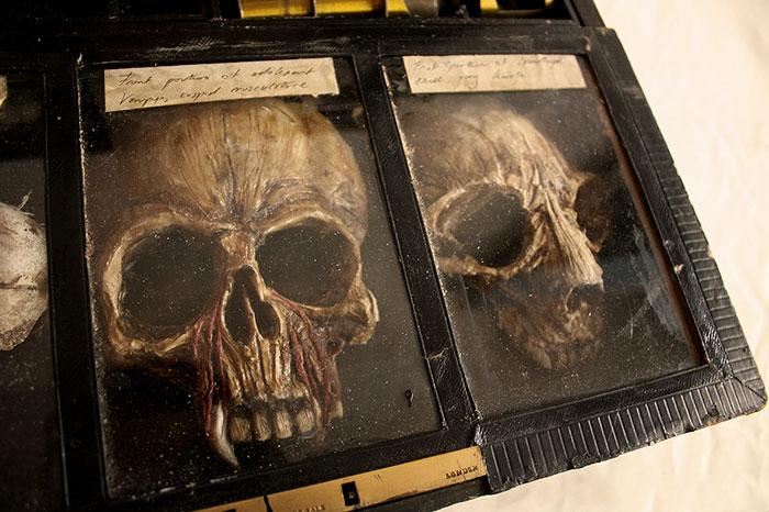 esqueletos-de-Thomas-Theodore-Merrylin_05