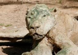 animais-tornam-se-mumias-em-zoologico-abandonado