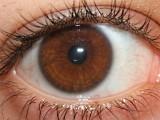 olho-castanho