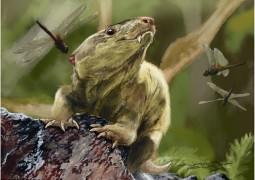 ancestral-dos-mamiferos-encontrado-no-brasil