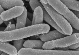 bacteria-encontrada-em-caverna-e-resistente