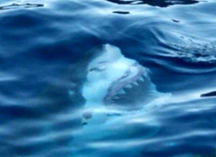 dezoito-fotos-assustadoras-que-vao-fazer-voce-pensar-duas-vezes-sobre-o-oceano_02