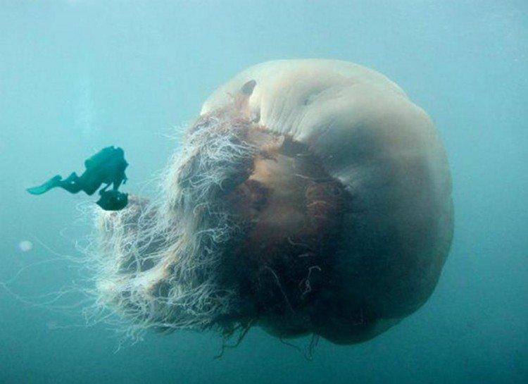 dezoito-fotos-assustadoras-que-vao-fazer-voce-pensar-duas-vezes-sobre-o-oceano_04