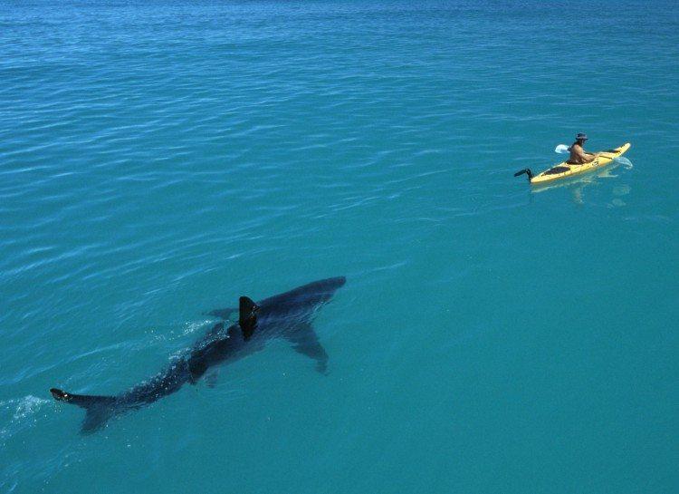 dezoito-fotos-assustadoras-que-vao-fazer-voce-pensar-duas-vezes-sobre-o-oceano_06