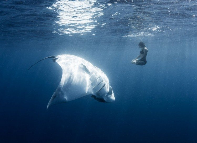 dezoito-fotos-assustadoras-que-vao-fazer-voce-pensar-duas-vezes-sobre-o-oceano_08
