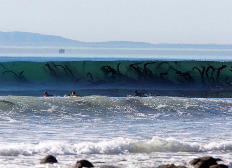 dezoito-fotos-assustadoras-que-vao-fazer-voce-pensar-duas-vezes-sobre-o-oceano_09