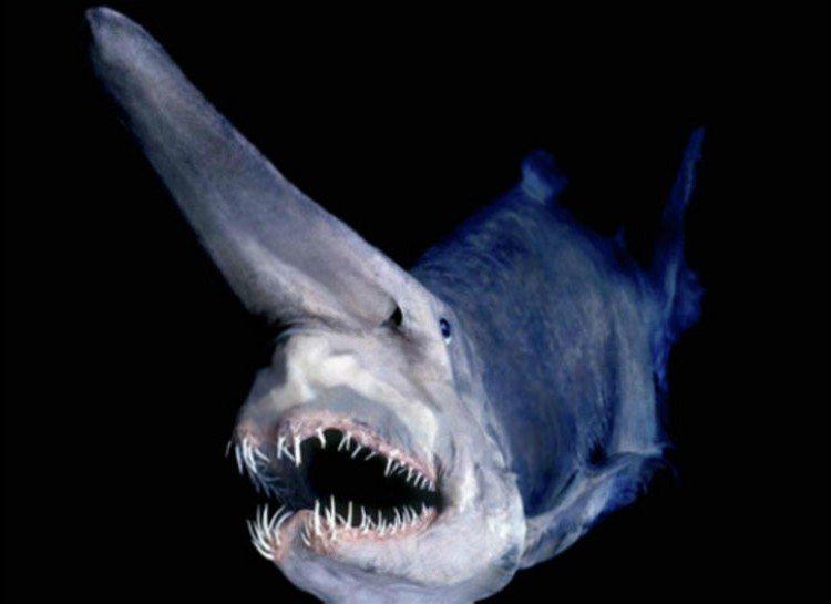 dezoito-fotos-assustadoras-que-vao-fazer-voce-pensar-duas-vezes-sobre-o-oceano_10