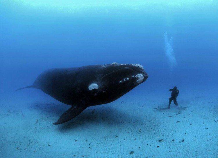 dezoito-fotos-assustadoras-que-vao-fazer-voce-pensar-duas-vezes-sobre-o-oceano_16