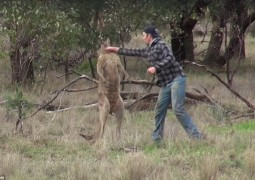 homem-da-soco-em-canguru-para-salvar-cachorro_capa