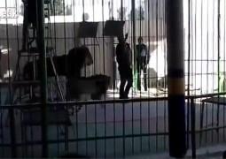 leao-ataca-domador
