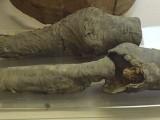 membros-mumificados-da-rainha-nefertari