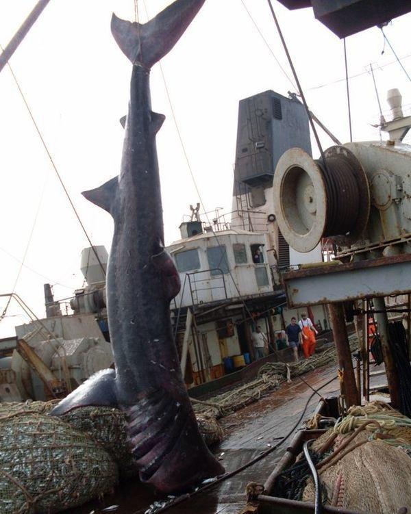algo-inesperado-na-rede-de-pesca_05