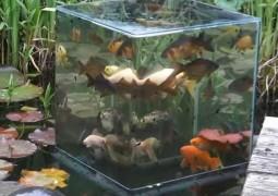aquario-invertido