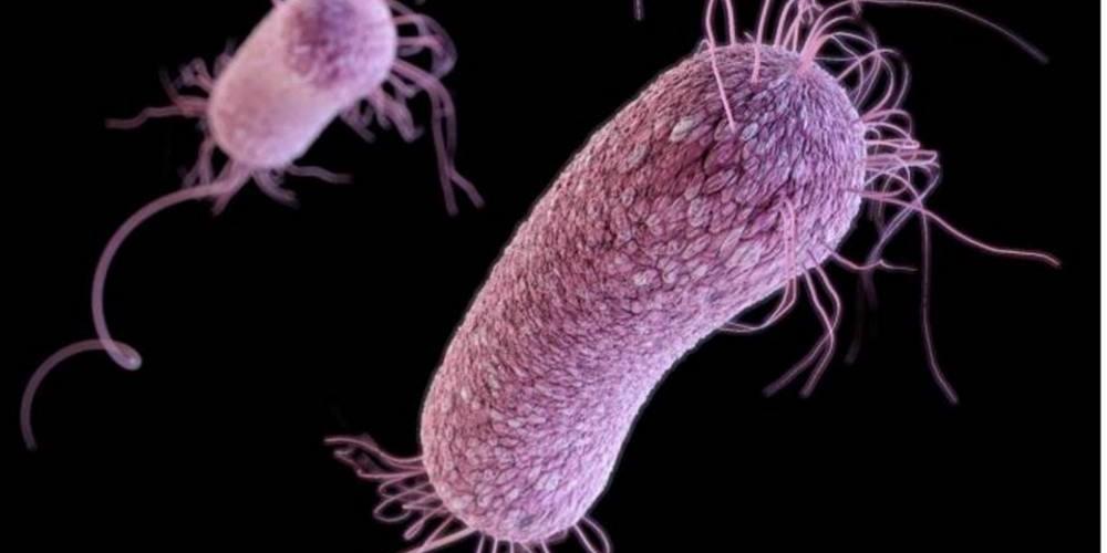 bacterias_01
