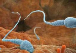 curiosidades-esperma