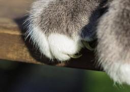 doença-arranhadura-de-gato_01