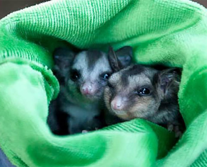 familia-australiana-encontra-animal_2
