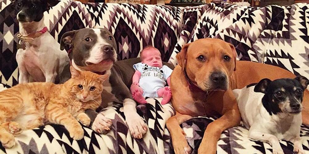 familia-de-animais-de-estimaçao_01