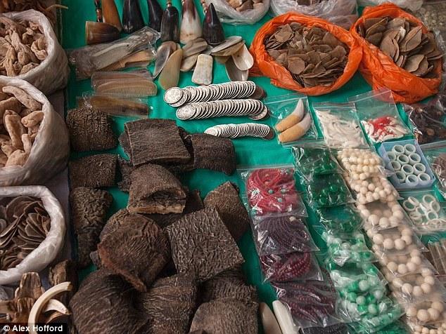 ong-denuncia-comercio-ilegal-de-elefantes_1