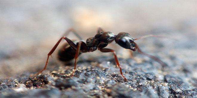 porque-na-islandia-nao-tem-formigas_3