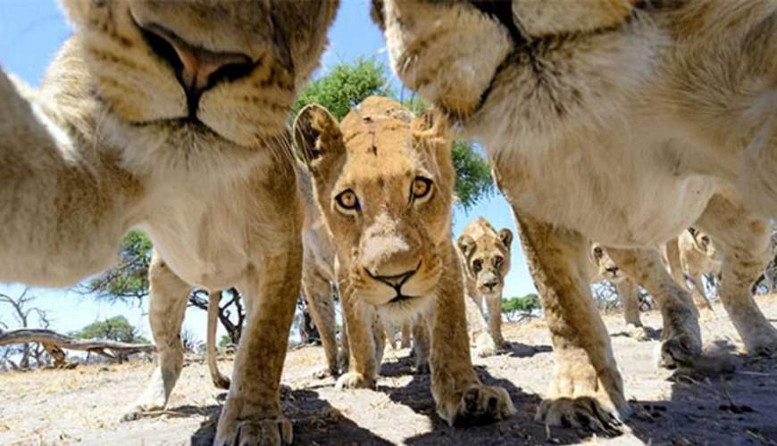 selfies-animais_6