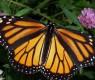 borboletas-no estomago