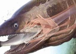 moreias-peixe-assustador