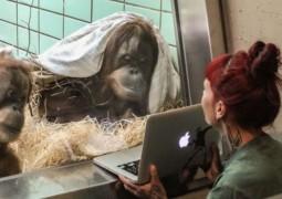 tinder-orangotangos