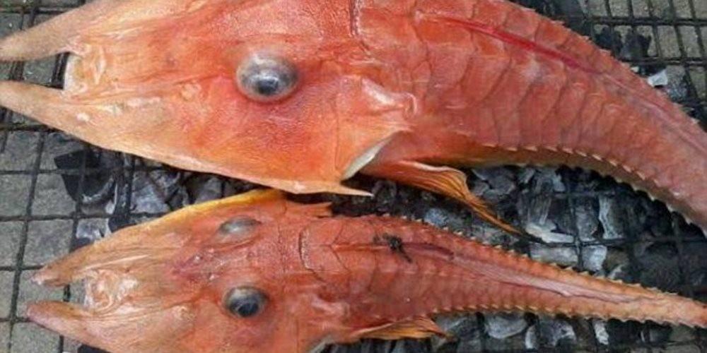 peixes-encontrados
