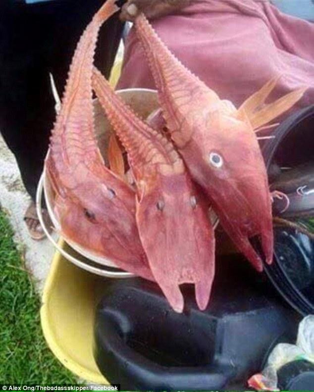 peixes-encontrados_1