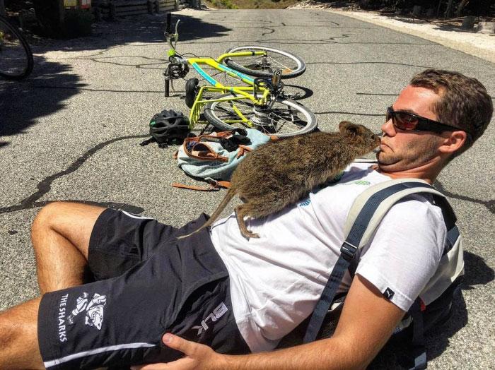 quokka-meets-cyclist-man-australia_4
