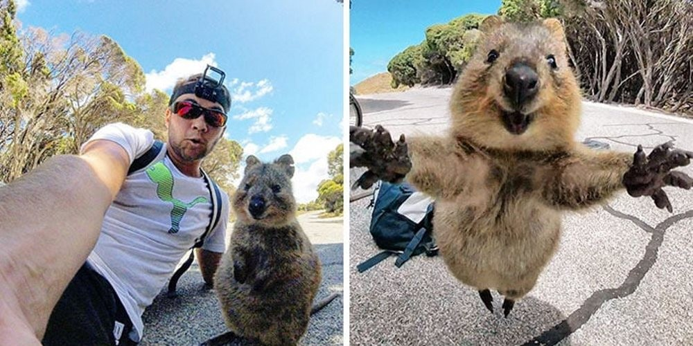 quokka-meets-cyclist-man-australia_capa