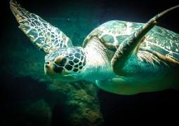 tartaruga-marinha_01
