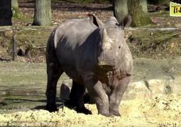 zoo-rinoceronte_04