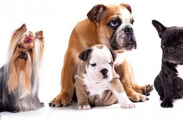 Raças_de_cachorros_da_moda