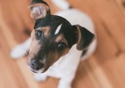 cachorro-animais-de-estimação_01