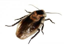 cockroach-566712_960_720