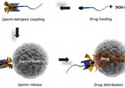 espermatozoide_cancer-01