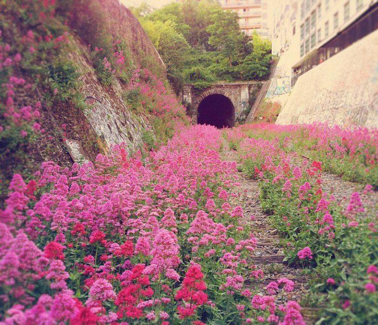 lugares-abandonados-dominados-pela-natureza_12