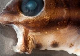 peixe-venenoso_01