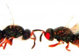 vespas-de-ohos-vermelhos-01