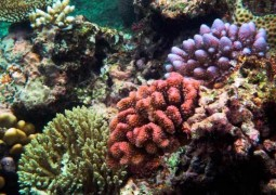 corais-australia-2