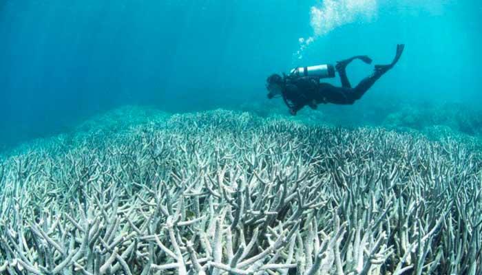corais-australia