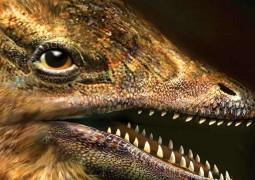 galinha-com-cara-de-dinossauro-2