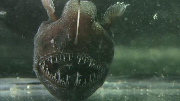 maiores-misterios-do-fundo-do-mar-4