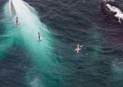 baleia-gigante-branca
