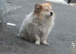cachorro-espera-dona-que-nao-vai-voltar