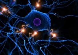 cerebro-comeca-a-se-comer